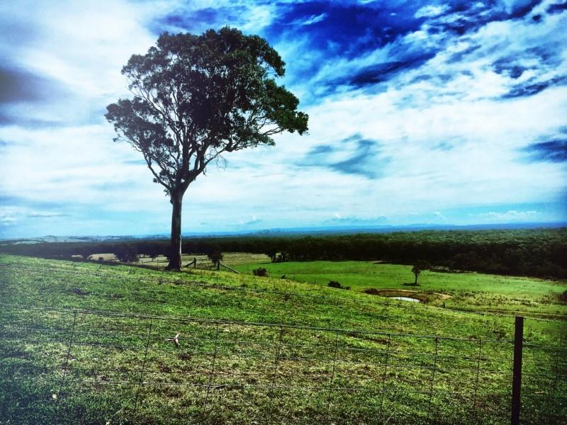 92 Mount Minderoo Lane, High Range NSW 2575