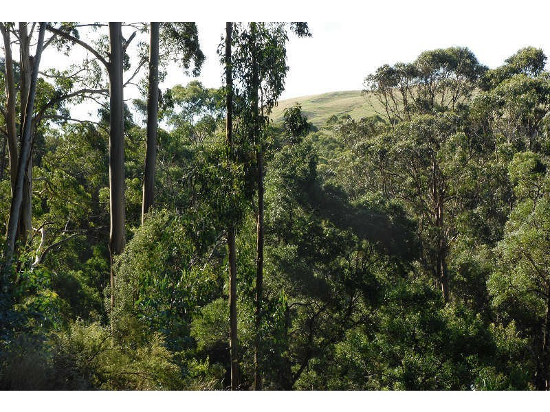 80 Old Hordernvale Access Road, Apollo Bay VIC 3233