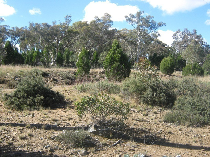 Lot 5 Woodlands Drive, Binjura NSW 2630