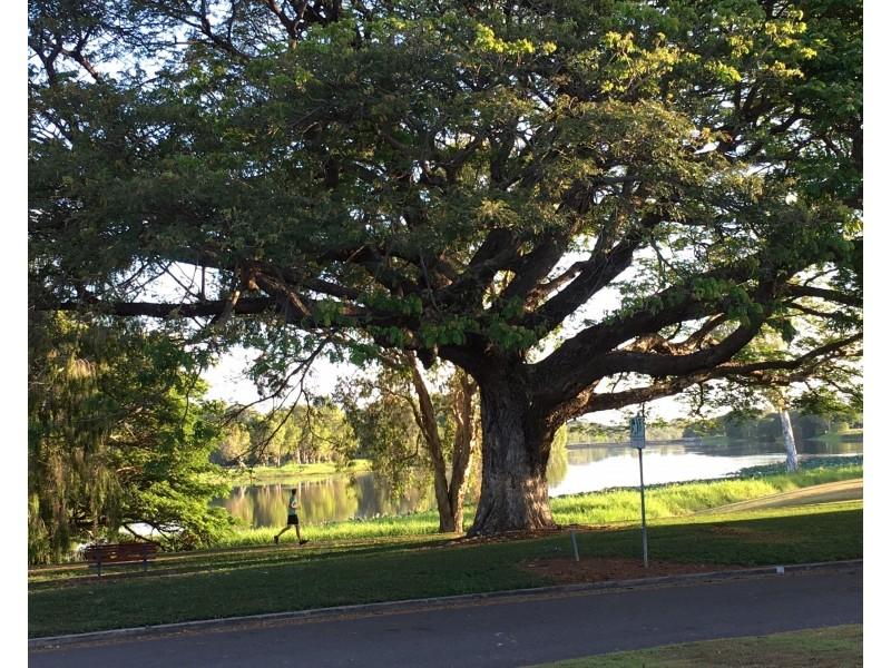 109 MARABOU DRIVE, Annandale QLD 4814