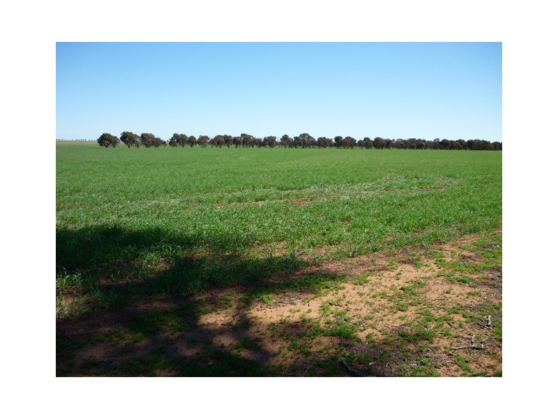 Lot 1 Cnr Neening and Goldfields Road, Nangeenan WA 6414