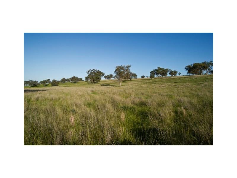 Woodlands Halls Road, Aberdeen NSW 2336