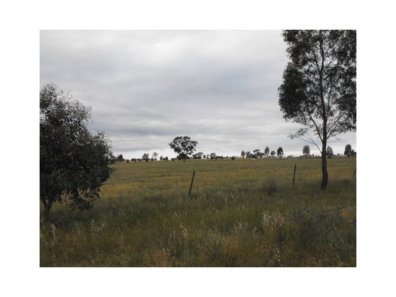 90 Wongalea Road, Gunningbland NSW 2876