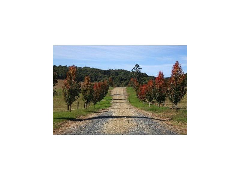 Lots 57 and 58 Upper Bo Bo Road, Brooklana NSW 2450