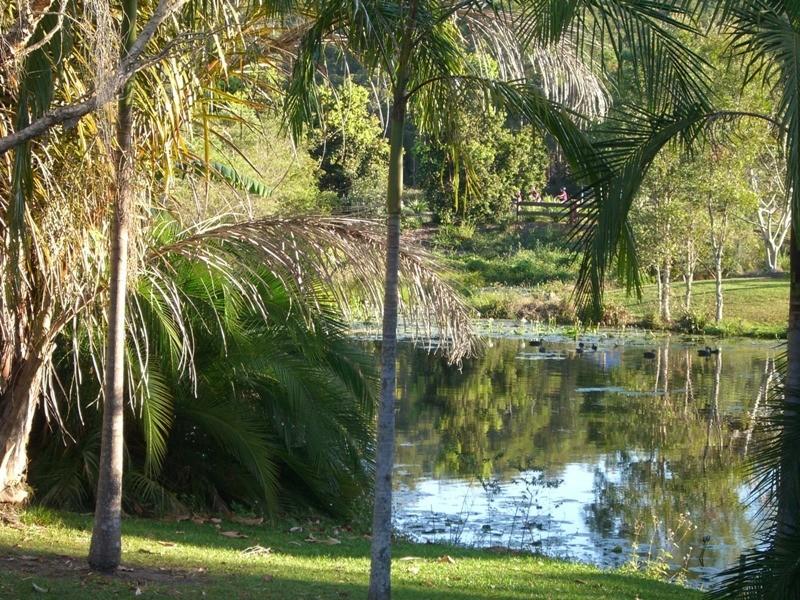 16 Flame Tree Court, Palmwoods QLD 4555