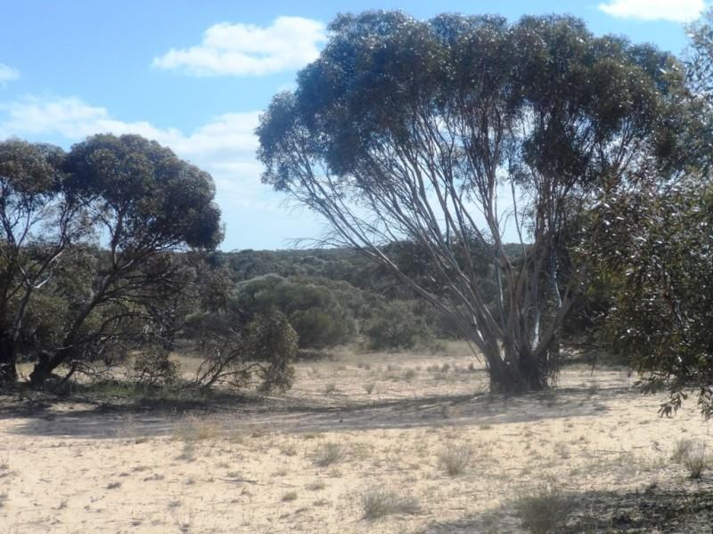 Section 24 Conservation Road, Pinnaroo SA 5304