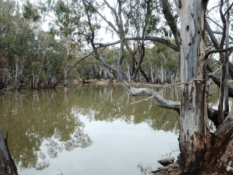 1 Deniliquin Road, Moulamein NSW 2733