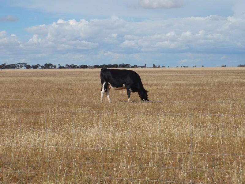 """""""Purapooka"""" Southdown Road, Deniliquin NSW 2710"""