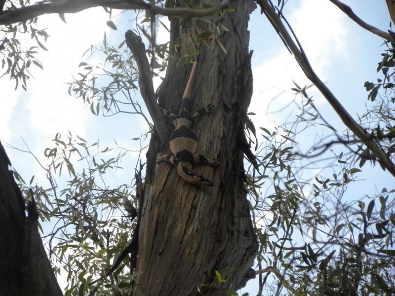 'Fairfield' 9517 Riverina Highway, Corowa NSW 2646