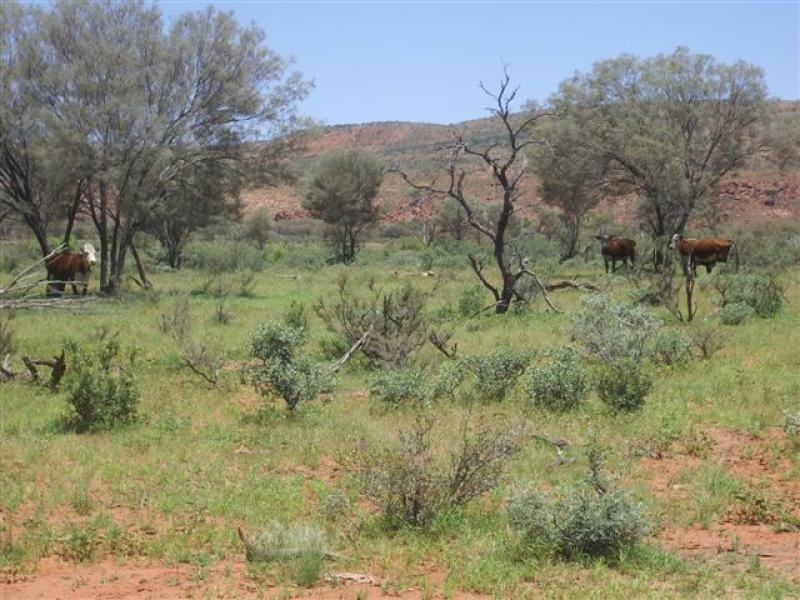 - MOUNT DOREEN STATION, Alice Springs NT 0870