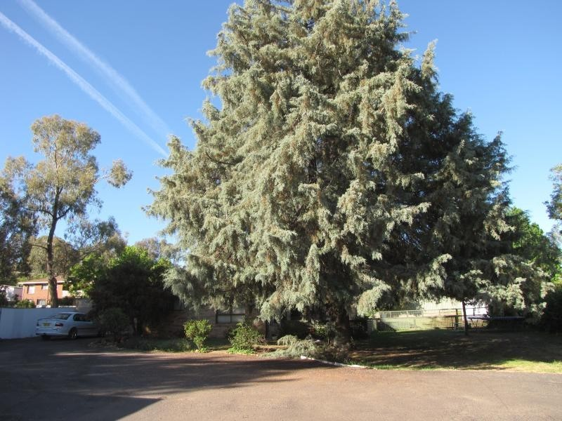 Callemondah 49 Blowering Road, Tumut NSW 2720