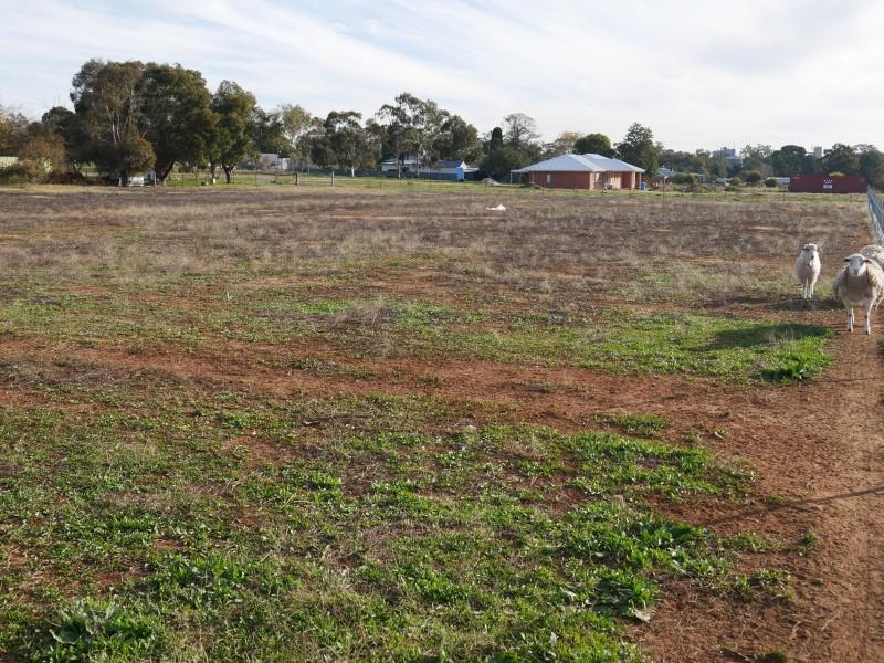 113 Pine Hill Road, Narrandera NSW 2700