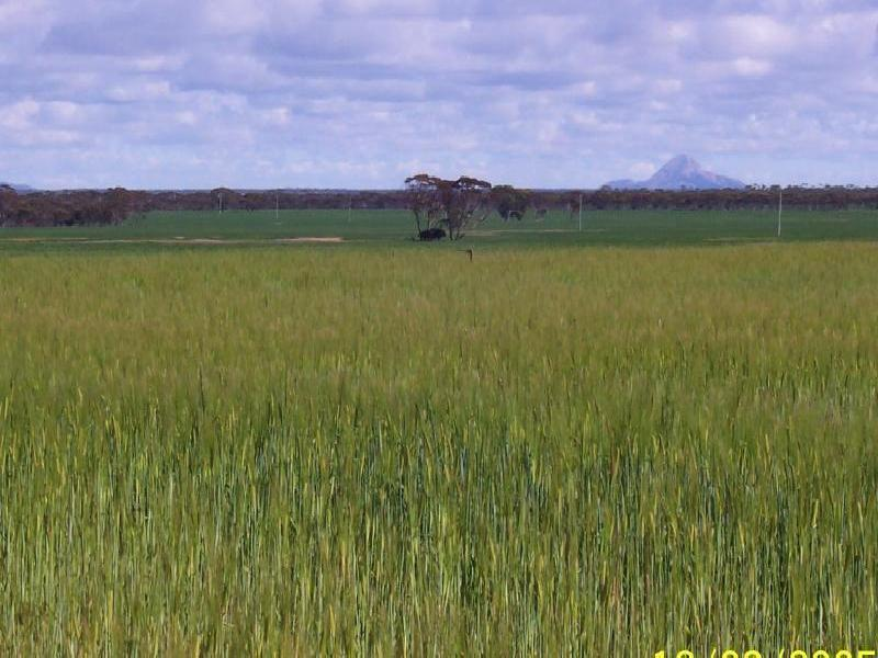 Grass Patch WA 6446
