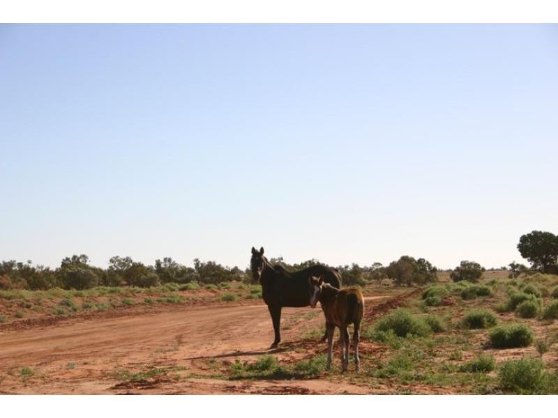 Quinyambie Station,160 km north west, Broken Hill NSW 2880