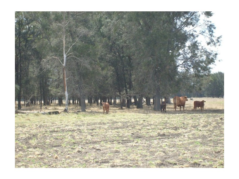 Lot 1 Owens Scrub Rd, Punchs Creek QLD 4357