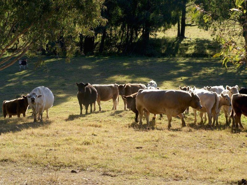 47 Clouts Road, Bergalia NSW 2537