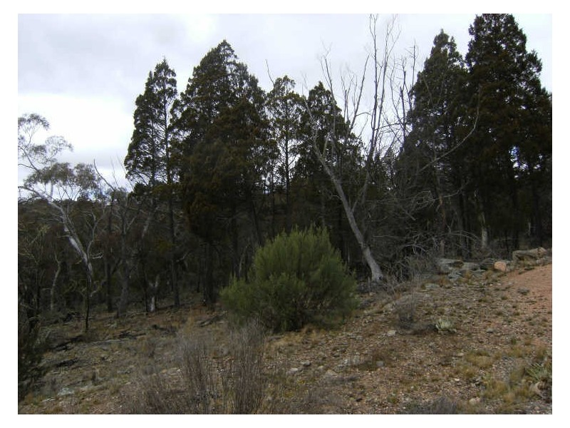 Lot 5 Woodlands Drive, Adaminaby NSW 2629