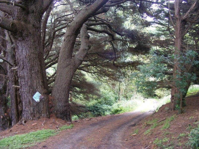 140 Biddles Road, Apollo Bay VIC 3233