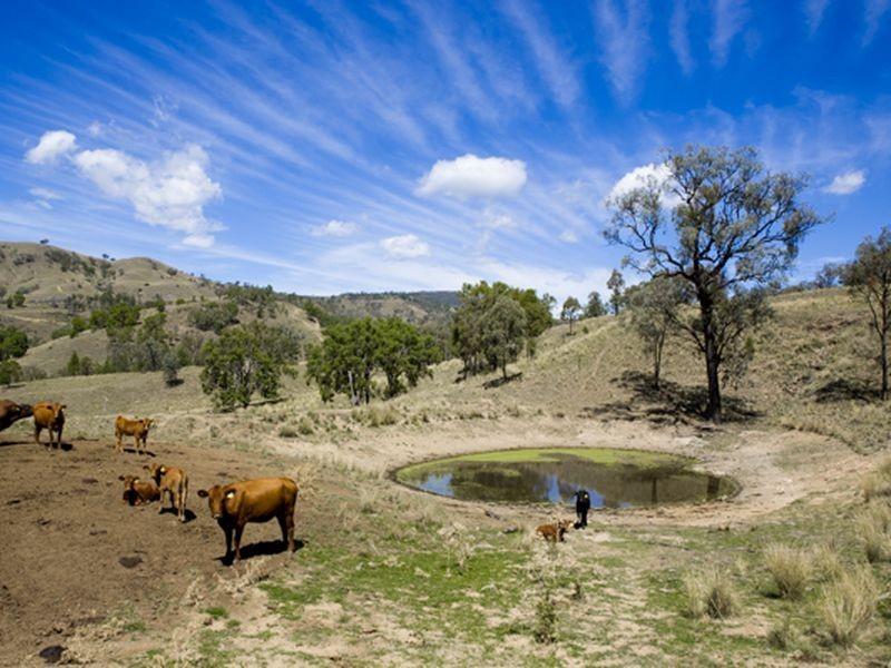'Llangollan', Back Creek NSW 2422