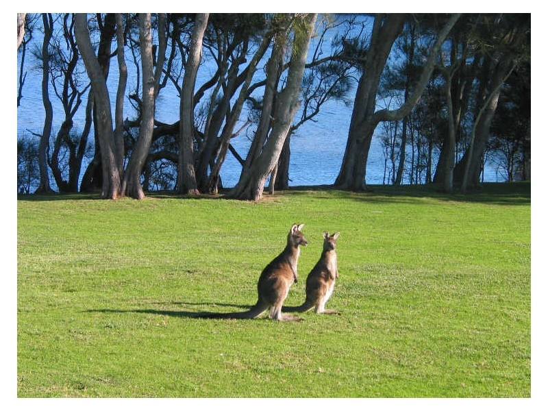 Chalet 7 Berrara Road, Berrara NSW 2540