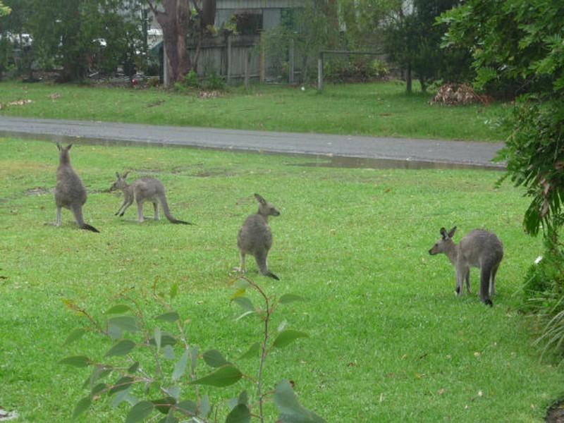 63 Berrara Road, Berrara NSW 2540