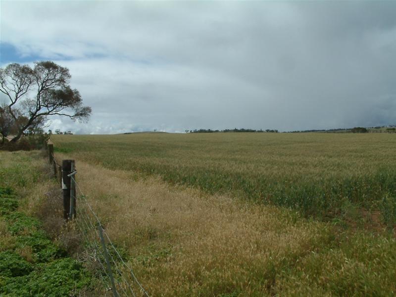 Section 345 Pfieffer Road, Mannum SA 5238