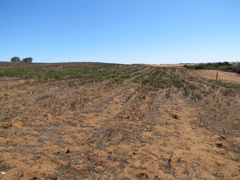 121 Zadow Road, Caloote SA 5254
