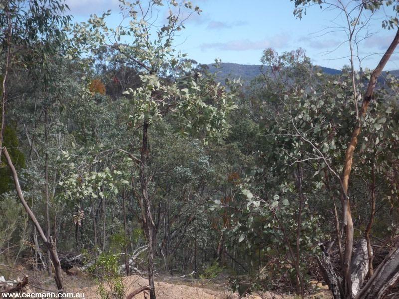 887 Bents Road, Ballandean QLD 4382