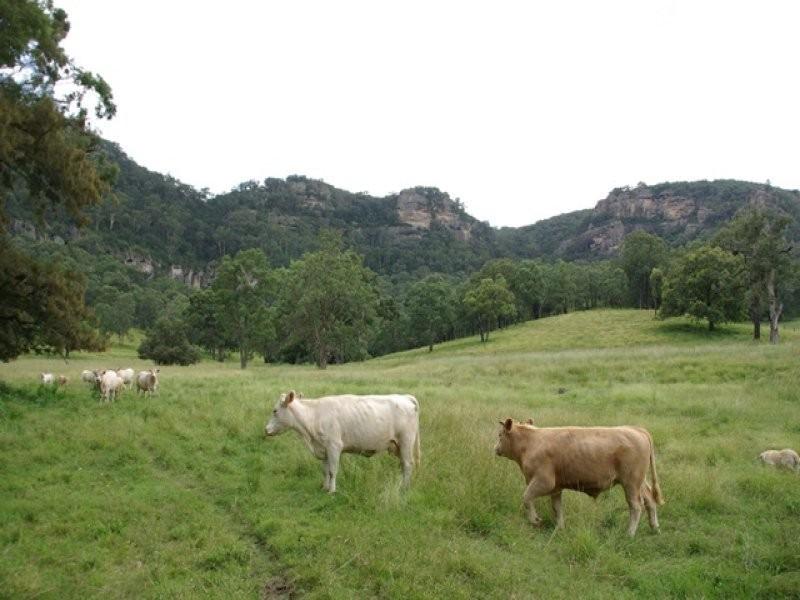 465 Dry Creek Road, Scone NSW 2337