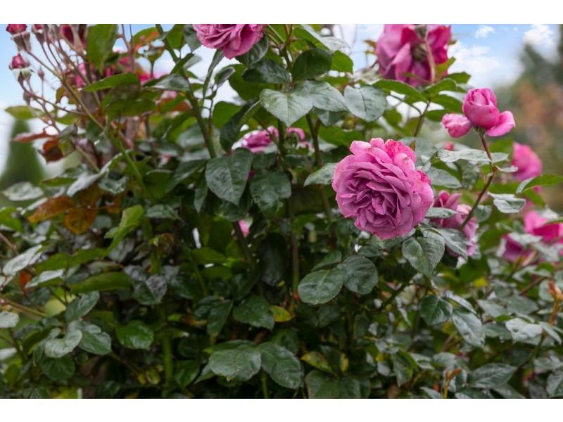 7 LINDEN WAY, Bowral NSW 2576