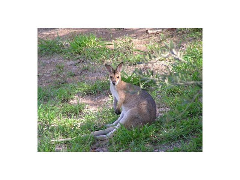 678 Kenilworth Skyring Creek Rd, Cooroy QLD 4563