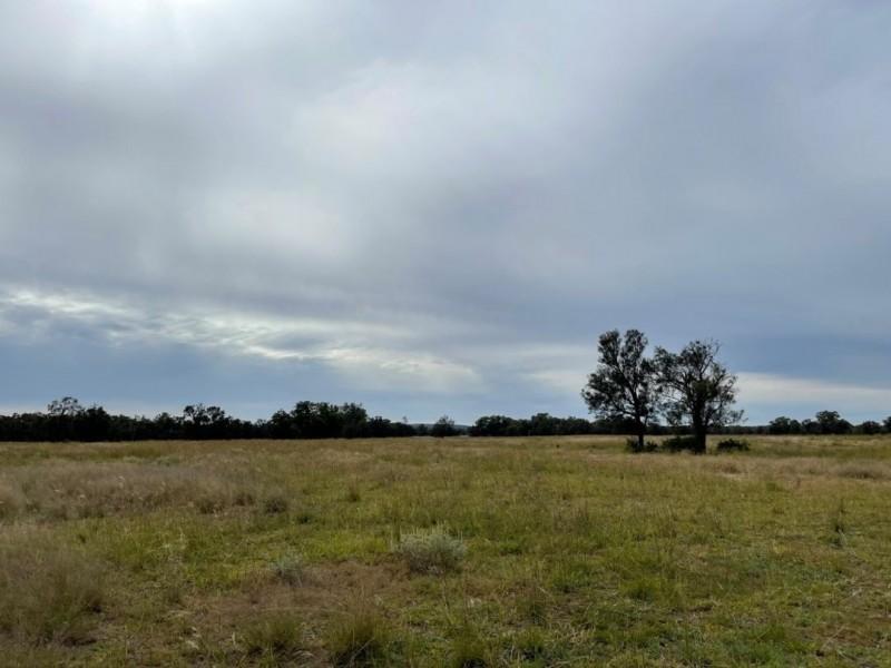 Oongarah, Pallamallawa NSW 2399