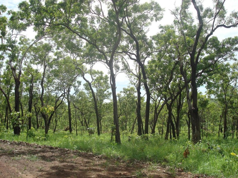 Sec 148 hundred of colton, Acacia Hills NT 0822