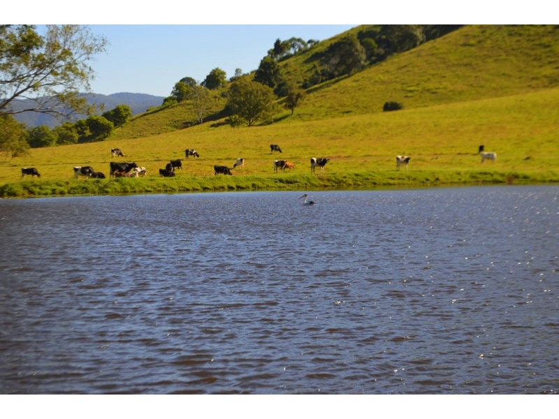 Lot 140 Cookes Road, Conondale QLD 4552