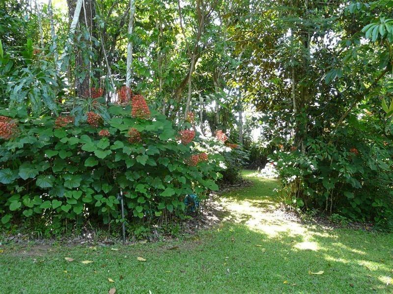 1 Josephine Falls, Bartle Frere QLD 4861