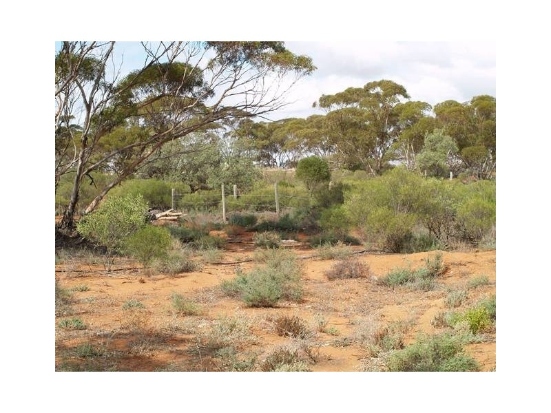 Lot 56 Mackintosh Road, Cadell SA 5321