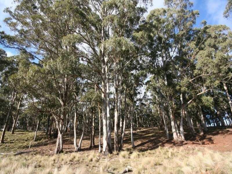 Gingkin NSW 2787